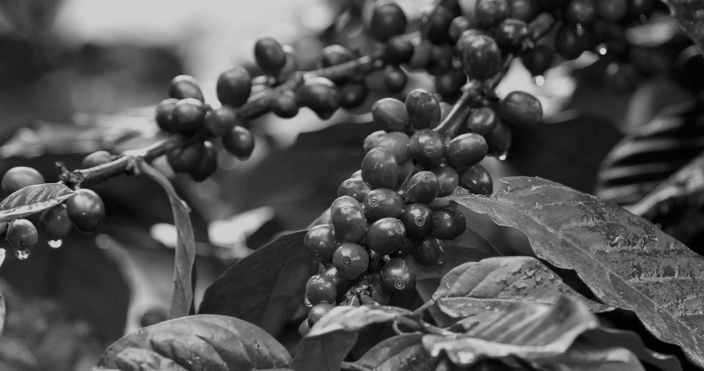 kaffee import europa
